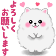 cute white Pomeranian animation