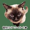 funny animals stickers5