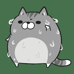 Plump cat in summer