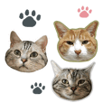 3cats photo stamps