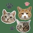 3匹の猫の写真スタンプ