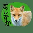 Wild animals in Hokkaido