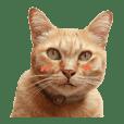 Futoru Cat