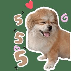 lovelydogg