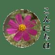 大人のお花のスタンプ【2】