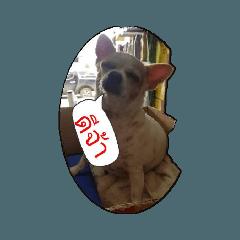 animal q_20210422092702