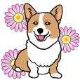 MAY the Welsh Corgi