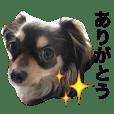 dog good dog