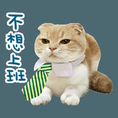 拉查花-真貓篇2