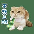 La-Cha-Hua's cats 2