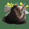 Common marmoset!