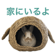Cute rabbit Conito-san 2