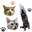 3cats photo stamps2