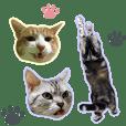3匹の猫の写真スタンプ2