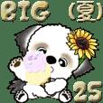 【Big】シーズー犬25『夏』