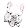 Karaage French Bulldog