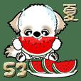 シーズー犬53『夏』