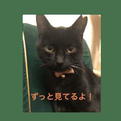 黒猫 クロネコ