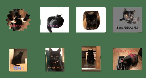 「黒猫 クロネコ」のLINEスタンプ一覧