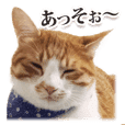 "Cat of Ibaraki dialect ""Boss-san"""