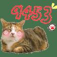 Fei Fei Meow