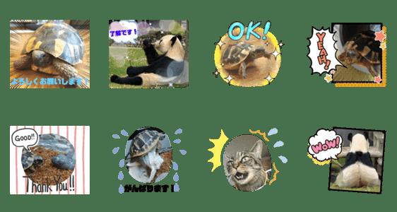 「カメとパンダとネコ」のLINEスタンプ一覧