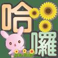 Cute pink rabbit-practical life language