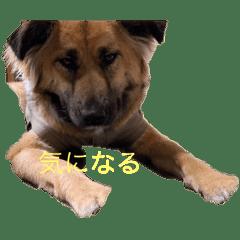 珍しい愛犬