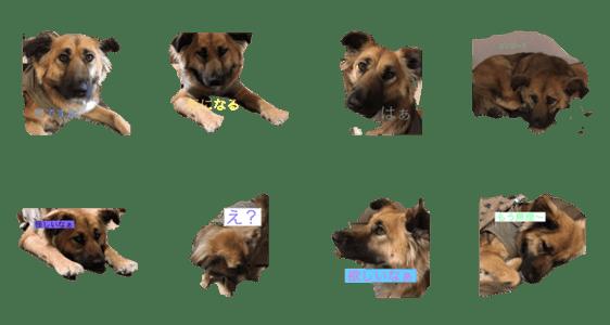 「珍しい愛犬」のLINEスタンプ一覧