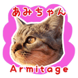 Tabby Cat Armitage-Amichan
