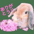 みるきー(うさぎ)の日常(リアル写真)
