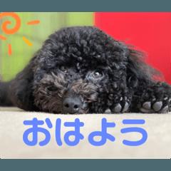 Chikatai_20210505152833