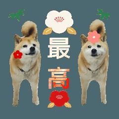 Tsujiko._20210505113939