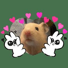 げっ歯類ちまきとかぼちゃん(ネズミ科)