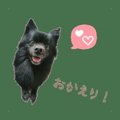 オレオとそら (日常生活編)