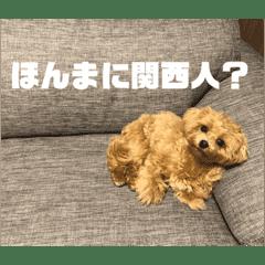 関西弁、毒舌犬(マルプー)