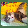 korosuke_kun