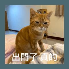 給萍萍貓蕊 part1