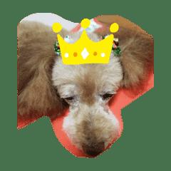 愛犬エルメス2