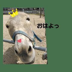 関西弁をしゃべる 動物たち。