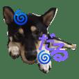 柴犬シェリーとモカの日常会話