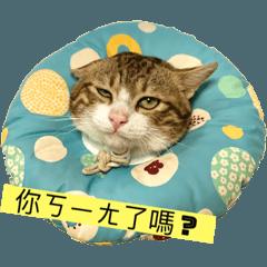 沾吐司龐德-貓咪梗圖x壓扁的麵包篇