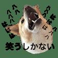 ぶさかわ犬【2】