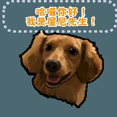 臘腸狗小屋尼3