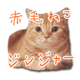 Ginger The Gingercat Photo Sticker VOL.1