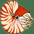 オウムガイと生きた化石