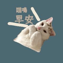 白文文系列