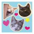 gin-neko family sticker.