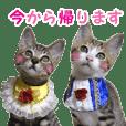 エビスくんとビシャちゃん(子猫編)