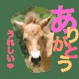 馬♡御崎馬  3